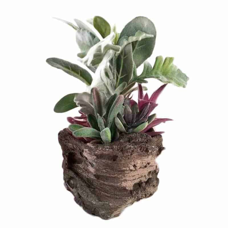 Fake succulent plant in rock
