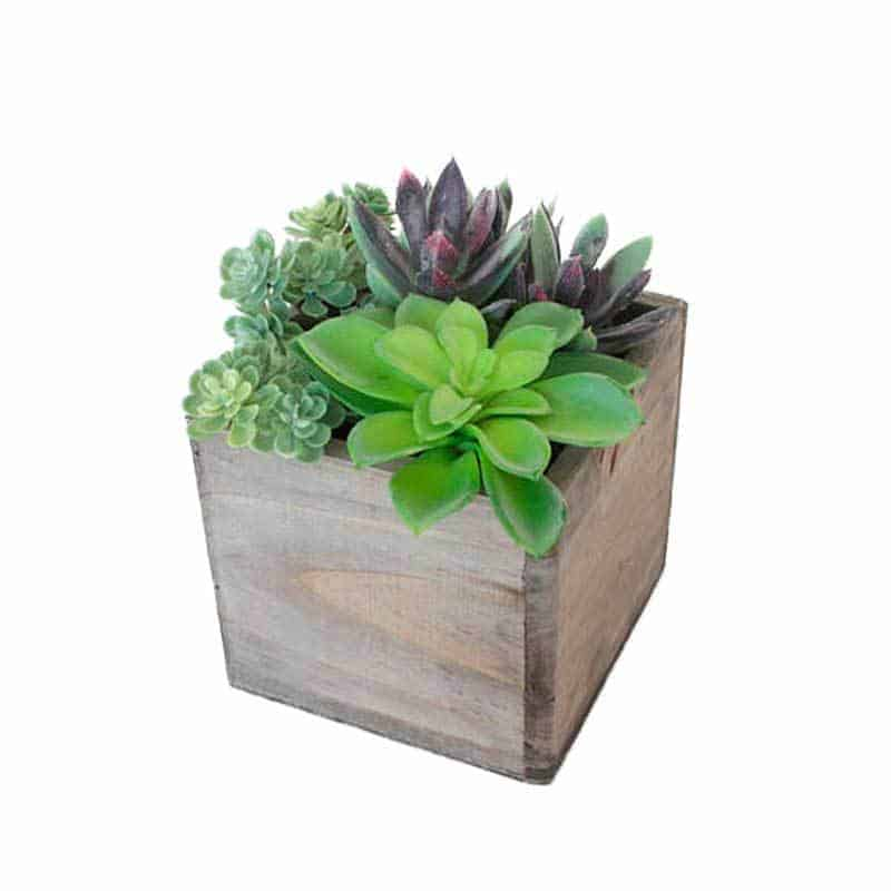 Fake succulent in wood box
